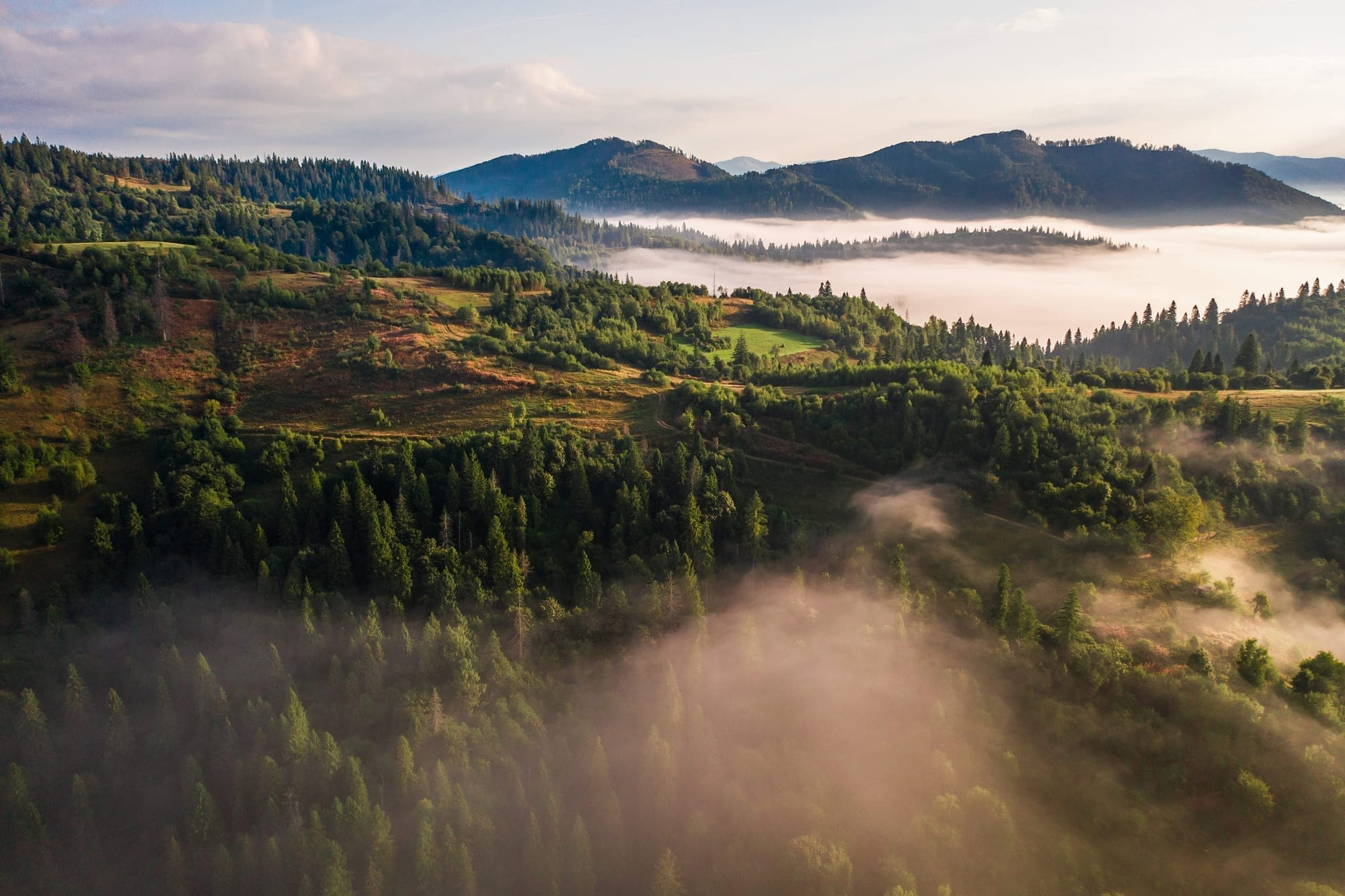 Aerial view of colorful mixed forest shrouded in morning fog